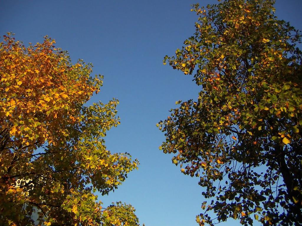 buurtje herfst