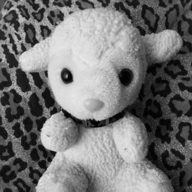 animal instagram mrsstilletto