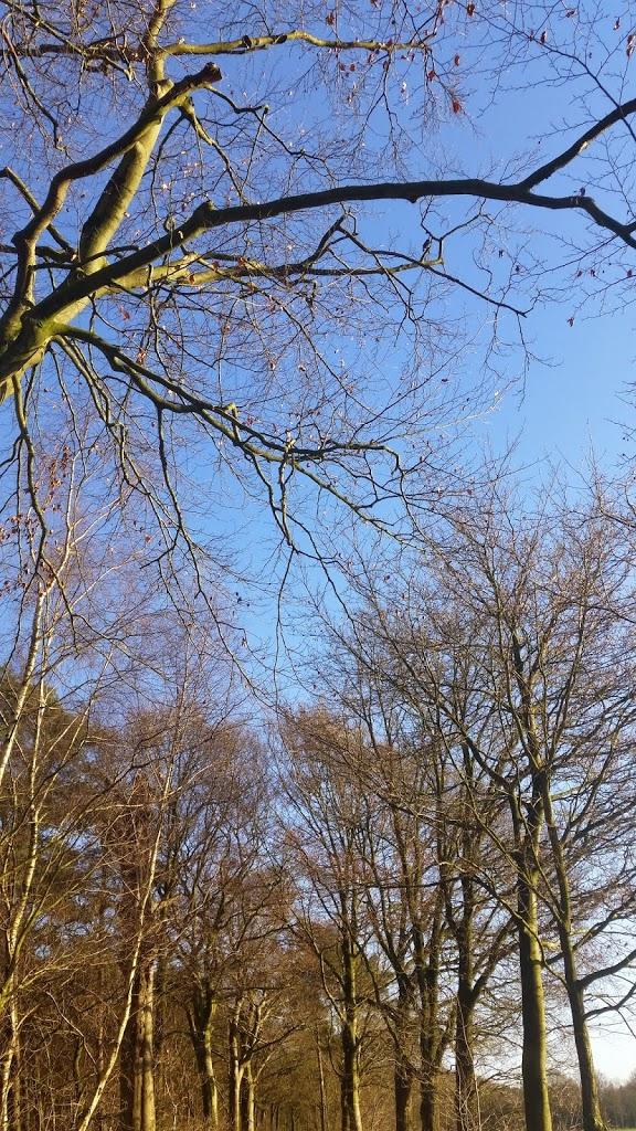 zonnig winterweer in het bos