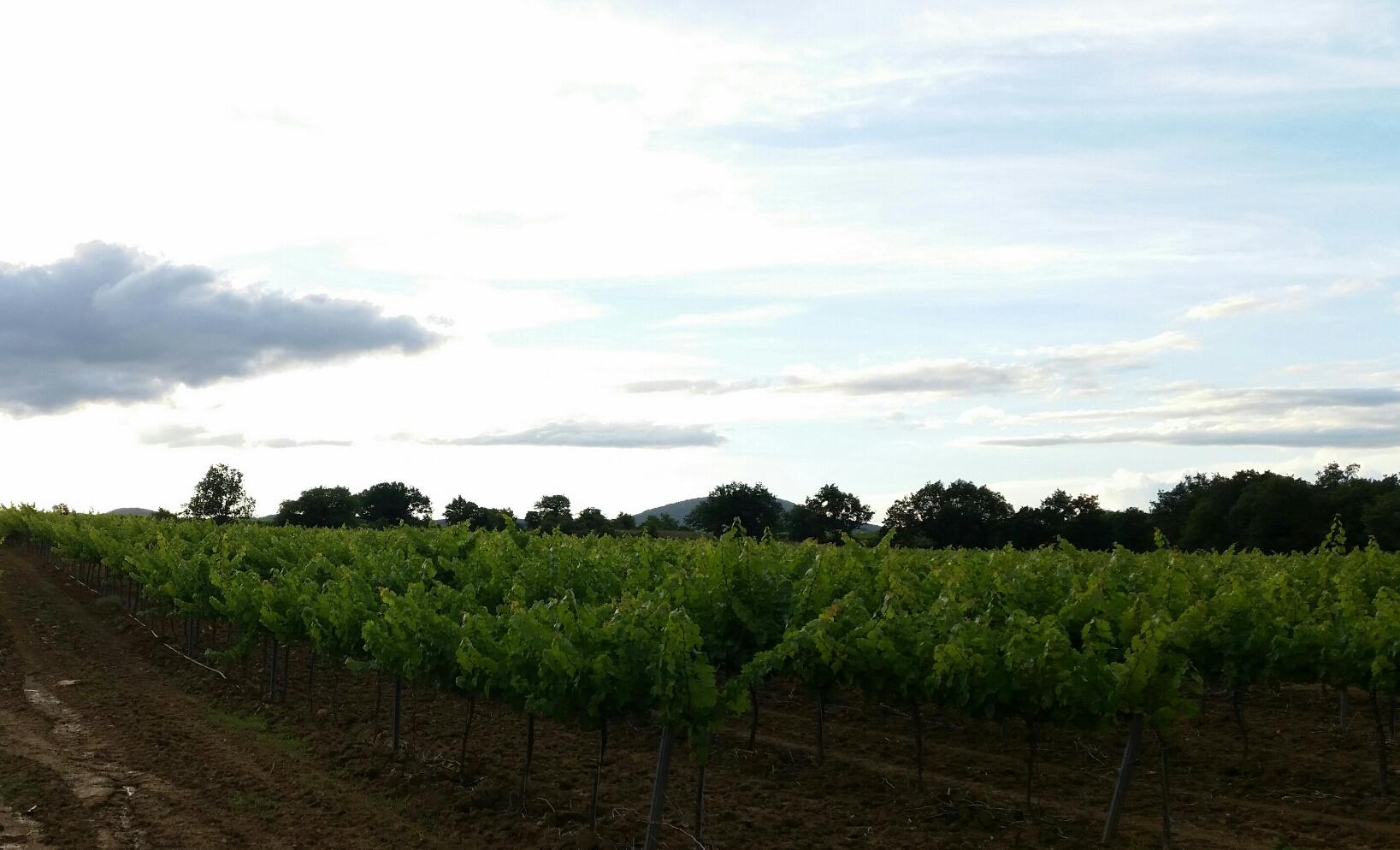 uitzicht wijnranken