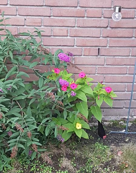 najaar planten diary 39 2018